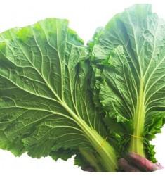 维桑 白菜叶 20片叶 大绿 大白菜叶 东北特产饭包新鲜蔬菜 白菜叶子