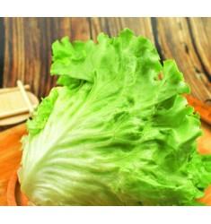 新鲜蔬菜绿叶生菜 约300g 生菜 火锅食材 沙拉食材 300g