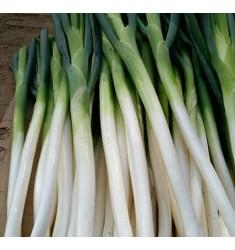 新鲜蔬菜 山东特产 章丘 大葱 新现挖大葱 2.5kg