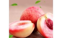 桃子现摘现发 新鲜水果