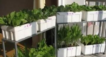 家庭菜园十款:食与美同在