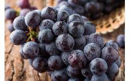 夏黑无籽葡萄/提子 1kg装 新鲜水果